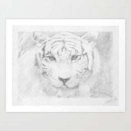 Graphite Tiger  Art Print