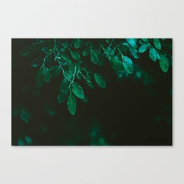 Huckleberry Leaves Canvas Print