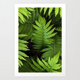framed fern Art Print