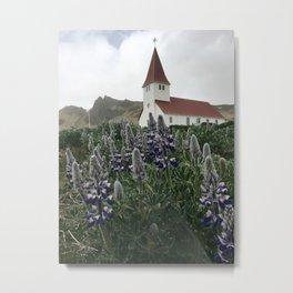 Lupine in Vík, Iceland Metal Print