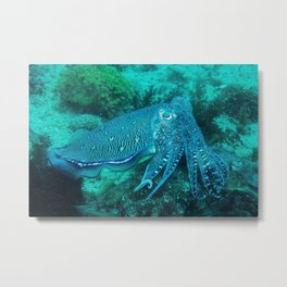 Cuttlefish Mating Dance Metal Print