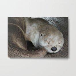 Sleeping Otter in a Log Metal Print