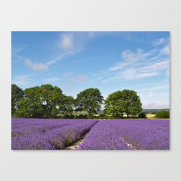 Hampshire Lavender Fields Canvas Print