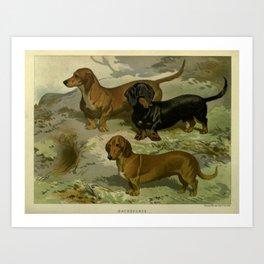 Vintage Dachshunds Art Print