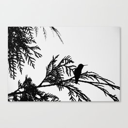the thoughtful hummingbird Canvas Print