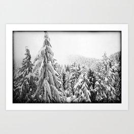 Snow Precious Art Print