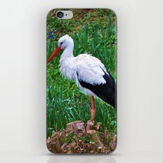 Storch iPhone & iPod Skin