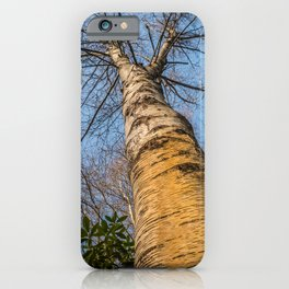 Looking up through the tree branches iPhone Case