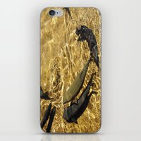 trout iPhone & iPod Skins featuring Trout by Impromptu;