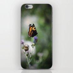 Schmetterling iPhone & iPod Skin