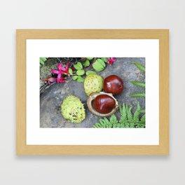 Conkers -horse chestnuts Framed Art Print