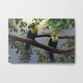 National Aviary - Pittsburgh - Keel Billed Toucan 2 Metal Print