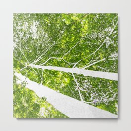 See the Forest for the Trees Metal Print