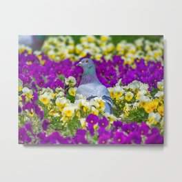 Pigeon and Pansies Metal Print