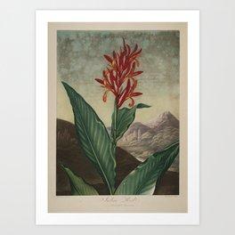 Temple of Flora: Inian Reed Art Print