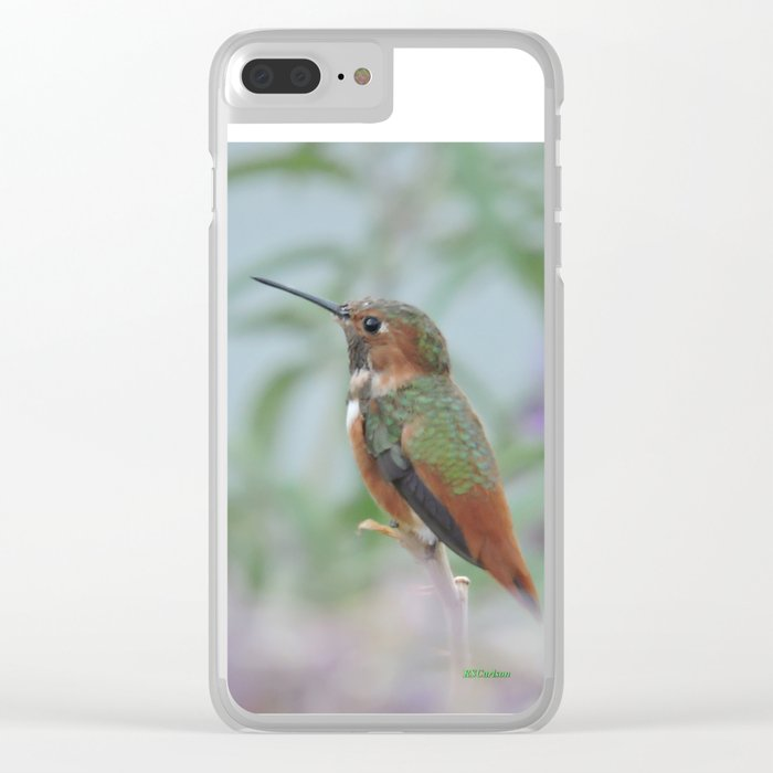 Allen's Hummingbird Sentinel Clear iPhone Case