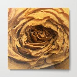 Old Rose Metal Print