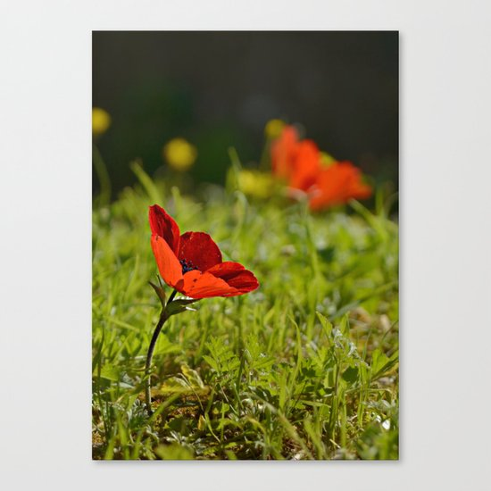 Solitary Anemone Canvas Print