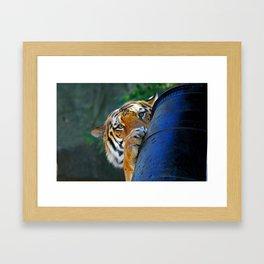 Playful Amur Tiger Framed Art Print
