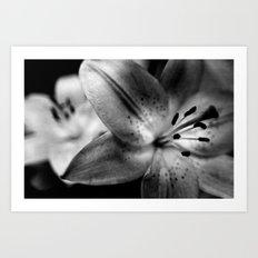 Casablanca Lily Art Print
