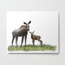 Moose Cow and Calf Digital Watercolour Painting Metal Print