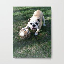 Bulldog Playing Soccer Metal Print