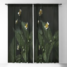 Botanical Still Life Chamomile Blackout Curtain