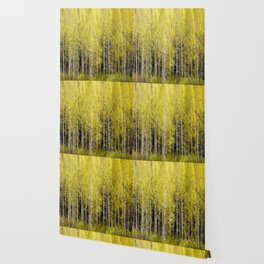Lovely spring atmosphere - vibrant green leaves on the trees - beautiful birch grove Wallpaper