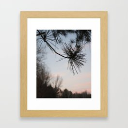 Pine Needles Framed Art Print