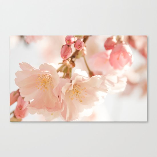 Cherry Bokeh Canvas Print