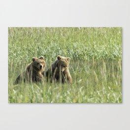 Brown Bear Cubs - Before Play Canvas Print