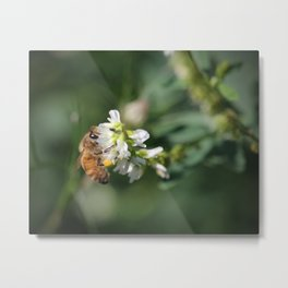 Honey Bee on Green Metal Print