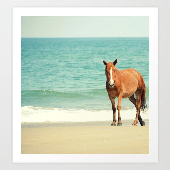 Wild Mustang of Carova, NC Art Print