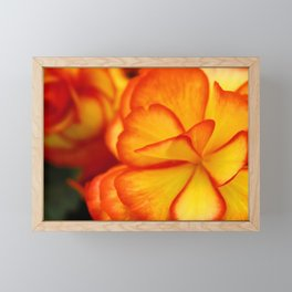 Orange and Yellow Blossoms Framed Mini Art Print