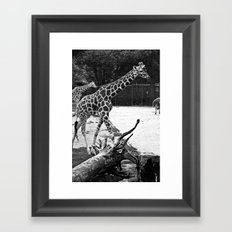 Timeless Giraffe Framed Art Print