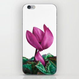 Cyclamen watercolour iPhone Skin