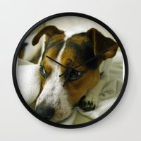 jack russell Wall Clocks featuring jack russell by Brmbrmba27