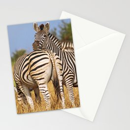 Life of the Zebras, Africa wildlife Stationery Cards