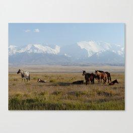 Wild horses between Sary Tash and Sary Mogul, Kyrgyzstan Canvas Print