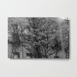 bold nature Metal Print