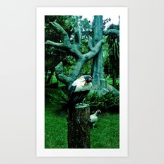 birds locked. Art Print
