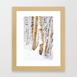 Snow Covered Birch Trees Framed Art Print