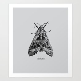 Cabbage Moth [Mamestra brassicae] Art Print