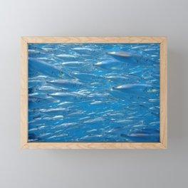 Fish shoal of common bellowsfish Framed Mini Art Print