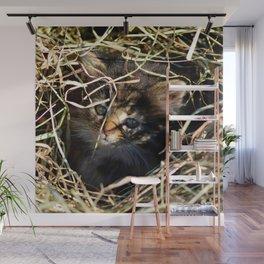 Barn Cat Cuteness  Wall Mural