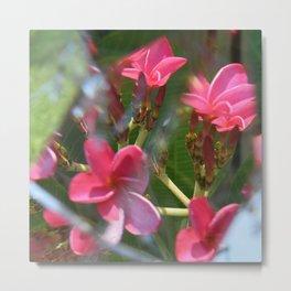 Petal Pink Metal Print