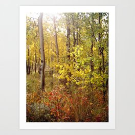 You Can Just Hear the Breeze Through the Trees  Art Print