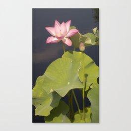 Pink Lotus by Teresa Thompson Canvas Print