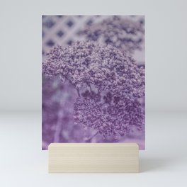 Sedum in Winter Mini Art Print