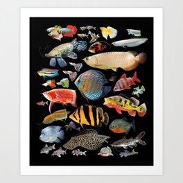 Freshwater tropical fish Art Print